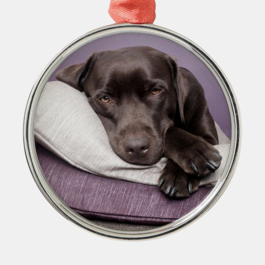 Chocolate labrador retriever dog sleepy on pillows metal ornament