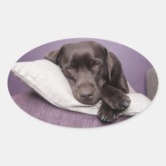 Chocolate labrador retriever dog sleepy on pillows oval sticker