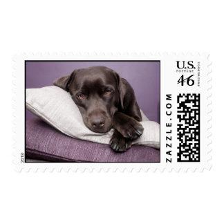 Chocolate labrador retriever dog sleepy on pillows stamps