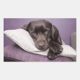 Chocolate labrador retriever dog sleepy on pillows rectangular sticker