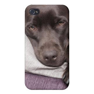 Chocolate labrador retriever dog tired on pillows iPhone 4 cases