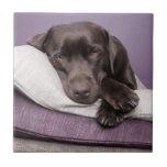 Chocolate labrador retriever dog tired on pillows ceramic tile