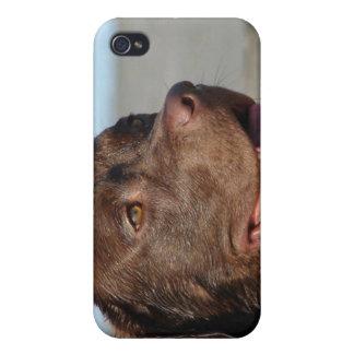 Chocolate Labrador Retriever iPhone Case Cover For iPhone 4