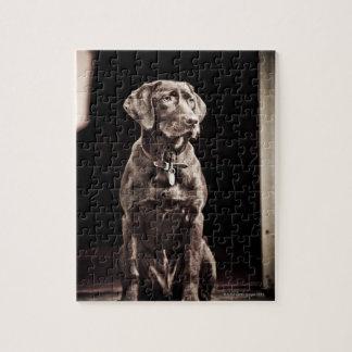 Chocolate Labrador Retriever Jigsaw Puzzle