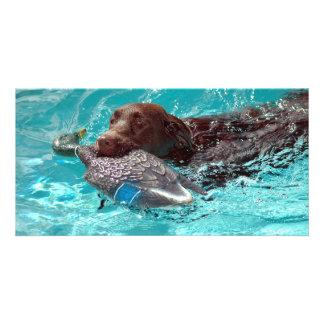 Chocolate Labrador Retriever Photo Greeting Card
