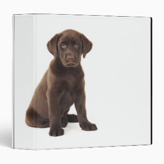 Chocolate Labrador Retriever Puppy 3 Ring Binder