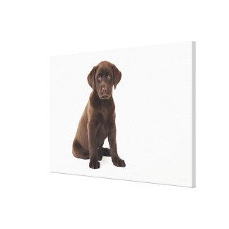 Chocolate Labrador Retriever Puppy Canvas Print