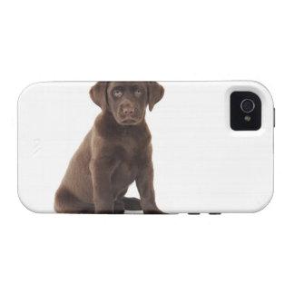 Chocolate Labrador Retriever Puppy iPhone 4 Covers