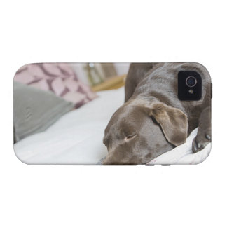 Chocolate labrador sleeping on bed iPhone 4 covers