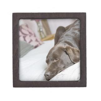 Chocolate labrador sleeping on bed premium keepsake box