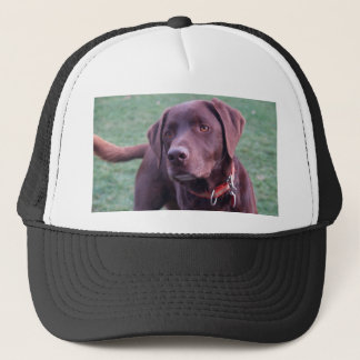 chocolate labrador trucker hat