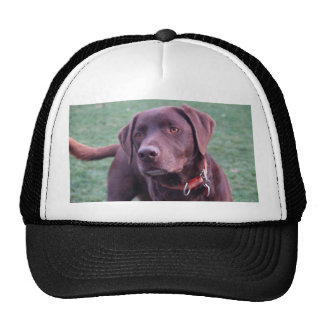 chocolate labrador trucker hat