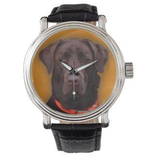 Chocolate Labrador Watch
