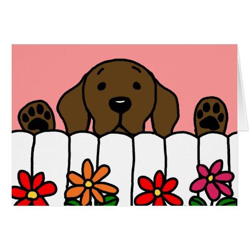 Chocolate Labrador watching you Greeting Card