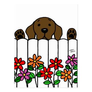 Chocolate Labrador watching you Postcard