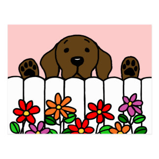 Chocolate Labrador watching you Post Cards