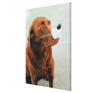 Chocolate Labrador Wearing a Fake Nose Canvas Print