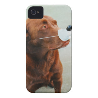 Chocolate Labrador Wearing a Fake Nose Case-Mate iPhone 4 Case