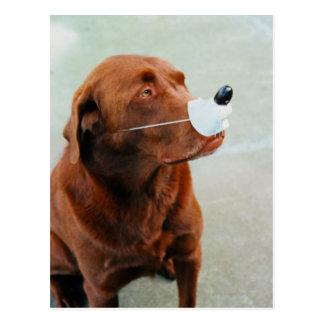 Chocolate Labrador Wearing a Fake Nose Postcard