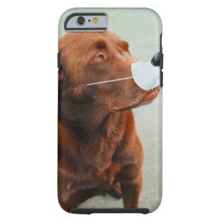 Chocolate Labrador Wearing a Fake Nose Tough iPhone 6 Case