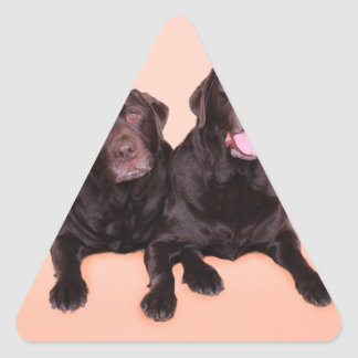 Chocolate Labradors - Lady and Chocolate Charlie Triangle Stickers