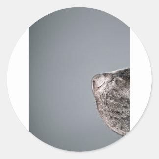 Chocolate Labrador's Nose Classic Round Sticker