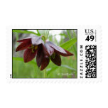 Chocolate Lily Postage