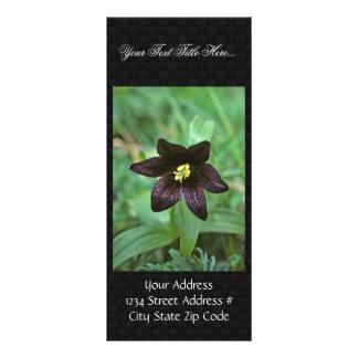 Chocolate Lily Rack Card Design