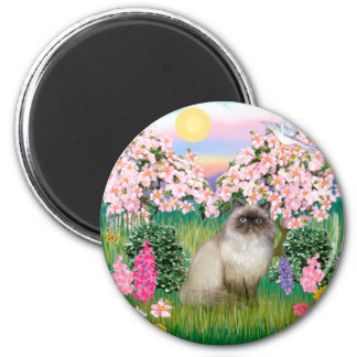Chocolate Point Himalayan -  Blossoms Fridge Magnet
