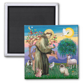 Chocolate Point Himalayan Cat  - St Francis Refrigerator Magnets