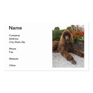 Chocolate Poodle Business Cards