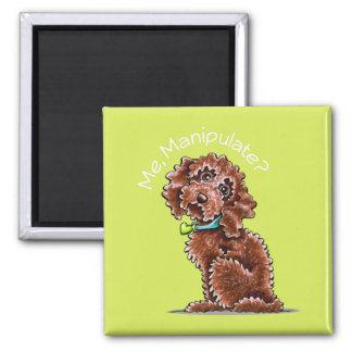 Chocolate Poodle Mix Me Manipulate Magnet