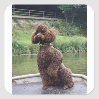 chocolate poodle sitting.png square sticker