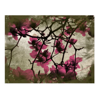 Chocolate Raspberry Blossom Branches Postcard