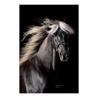 Chocolate Rocky Mountain Horse Poster