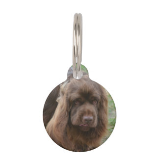 Chocolate Sussex Spaniel Pet Tags