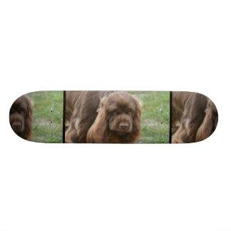 Chocolate Sussex Spaniel Custom Skateboard