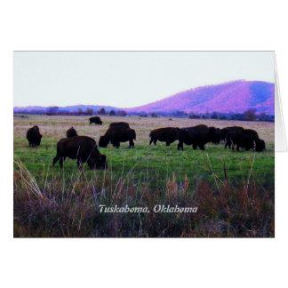Choctaw Greeting Cards ( Yunnush )