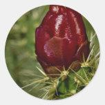 Cholla bud Pink flowers Round Sticker