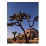 Cholla cactus and Cap Rock , Joshua Tree Post Card