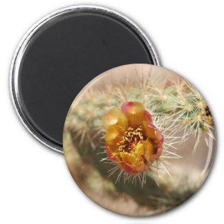 Cholla Cactus Bloom Fridge Magnet
