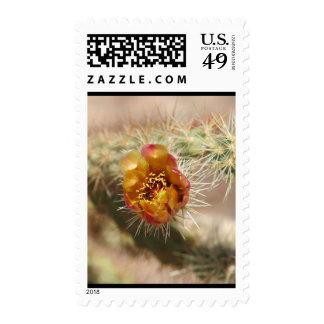 Cholla Cactus Bloom Stamps