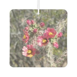 Cholla Cactus Blooms