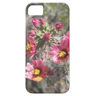 Cholla Cactus Blooms iPhone 5 Cover