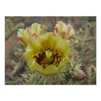 Cholla Cactus Flower Poster