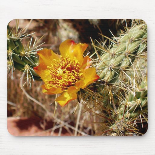 Cholla Flower Mouse Pad