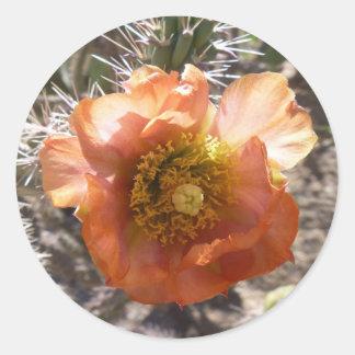 Cholla Peach Bloom | Customizable Stickers