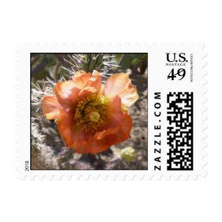 Cholla Peach Bloom Postage
