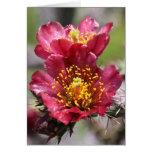 Cholla rojo florece tarjeta