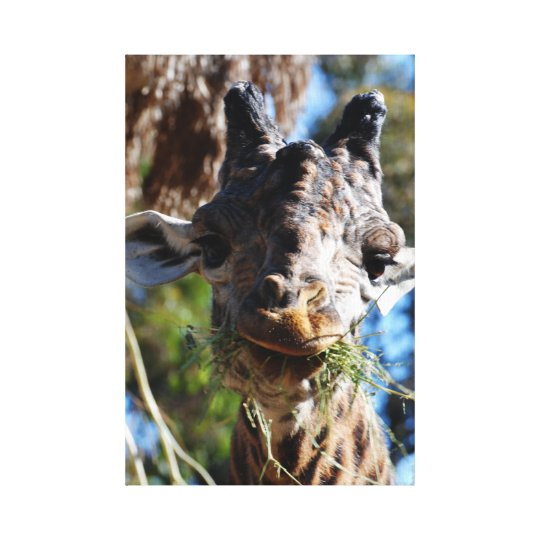 Chompin! Stretched Canvas Print